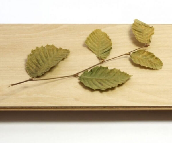 Wood Resist 0.55 Buche Light